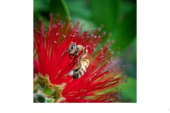 Busy Bee - Suzanne Martin (Commended - Open A Grade - 08 Apr 2021 PRNT)