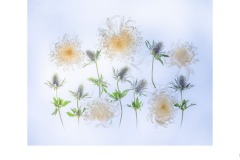 Chrysanthemums and Sea Holly - Lesley Bretherton (Best - Open A Grade - 08 Apr 2021 PRNT)