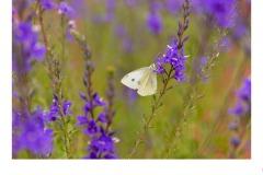 White/Purple - Lynette McKelvie (Highly Commended - Open B Grade - 08 Apr 2021 PRNT)