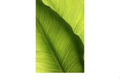 Leaves - Suzanne Martin (Commended - Open A Grade - 10 Sep 2020 PDI)