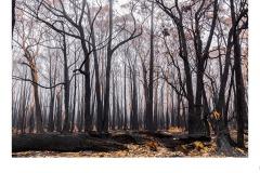 Benloch Bushfire - Lynette McKelvie (Highly Commended - Open B Grade - 11 Feb 2021 PRNT)