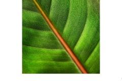 Bird Of Paradise Leaf - Suzanne Martin (Best - Set Subj A Grade - 11 Feb 2021 PRNT)