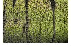 Green tree - Jayden Hancock (Highly Commended - Set Subj B Grade - 11 Feb 2021 PRNT)