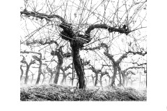 Marching Vines - Kaye Linsdell (Commended - Open B Grade - 11 Mar 2021 PRNT)
