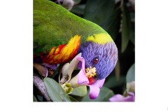 Polly wants some nectar - Gary Richardson (Commended - Open A Grade - 11 Mar 2021 PRNT)