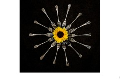 Forked Sun Flower - Graeme Diggle (Highly Commended - Set Subj A Grade - 13 Aug 2020 PDI)