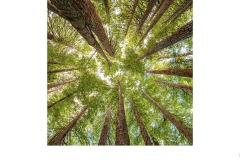 Otway Forest - Lesley Bretherton (Commended - Set Subj A Grade - 13 May 2021 PRNT)
