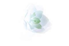 Hydrangea - Annette Donald (Commended - Open A Grade - Feb 2019 PDI)