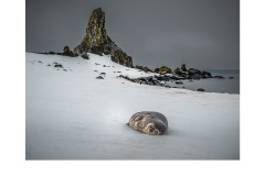 Weddell Seal Half Moon Island - Lesley Bretherton (Commended - Open A Grade - Feb 2019 PDI)