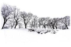 Winter Treescape - Peter Walton (Commended - Open A Grade - Feb 2019 PDI)