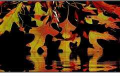 A Reflection of Leaves - John Spring (Commended - Open A Grade - Feb 2019 PDI)
