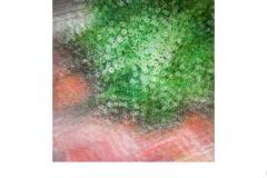 Impression of daisies - John Godfrey (Commended - Open B Grade - 22 Oct 2020 PDI)