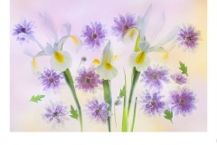 Iris and Chyrsanthamums - Lesley Bretherton (Commended - Open A Grade - 22 Oct 2020 PDI)
