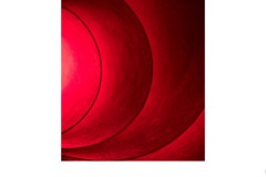 Red paper - Annette Donald (Highly Commended - Open A Grade - 22 Oct 2020 PDI)