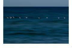 Seagulls - John Parkinson (Commended - Set Subj A Grade - 22 Oct 2020 PDI)