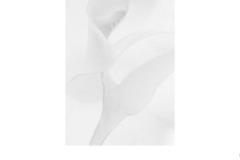 Delicate - Elizabeth Jackson (Best - Set Subj B Grade - 23 Feb 2020 PDI)
