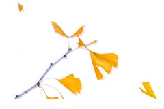 Fly Away - John Godfrey (Highly Commended - Set Subj B Grade - 23 Feb 2020 PDI)