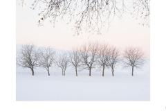 Nine  Trees - Lesley Bretherton (Best - Set Subj A Grade - 23 Feb 2020 PDI)