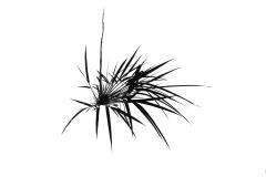 Bamboo Black & White - Annette Donald (Commended - Set Subj A Grade - 23 Feb 2020 PDI)