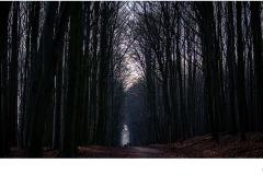Belgian Wood - John Godfrey (Commended - Set Subj B Grade - 24 Sep 2020 PDI)