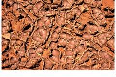 Chocolate mud - Lee-Anne Thomson (Commended - Set Subj B Grade - 25 Feb 2021 PDI)