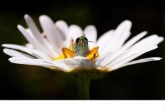 Grasshopper bed - Nicole Andrews (Commended - Open A Grade - 25 Feb 2021 PDI)