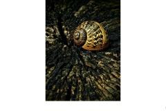Sleeping Snail. - James Mexias (Best - Set Subj A Grade - 25 Feb 2021 PDI)