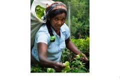 Tea Picker - Sri Lanka - Brendan Boag (Best - Set Subj B Grade - Feb 2020 PDI)