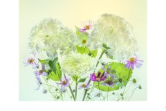 Hydrangea and Cosmos - Lesley Bretherton (Commended - Open A Grade - 27 May 2021 PDI)