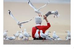 feeding the birds - David Gilliver (Best - Open A Grade - 27 May 2021 PDI)