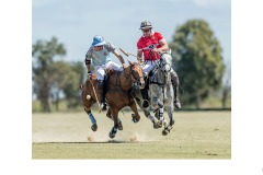 'Flying' Polo - Graeme Diggle (Highly Commended - Open A Grade - 28 May 2020 PDI)