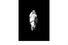 Horse's head - Charles Wyatt (Commended - Set Subj B Grade - 28 May 2020 PDI)