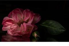 In The Garden - Suzanne Martin (Commended - Open A Grade - 9 Apr 2020 PDI)