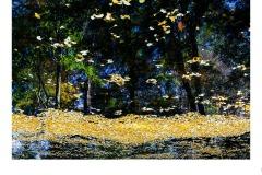 Light Aspects - Peter Black (Commended - Open B Grade - Aug 2019 PDI)