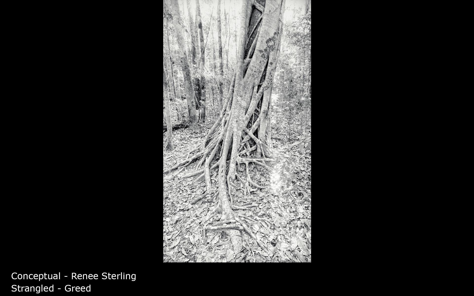 Strangled - Greed - Renee Sterling