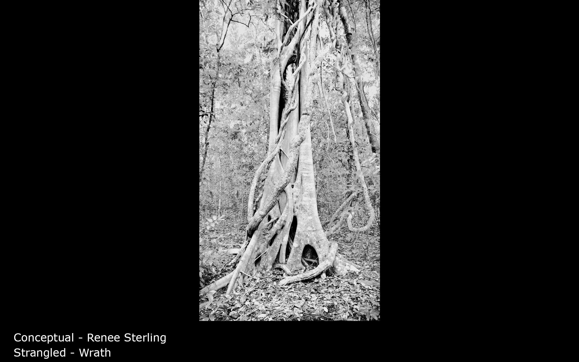 Strangled - Wrath - Renee Sterling
