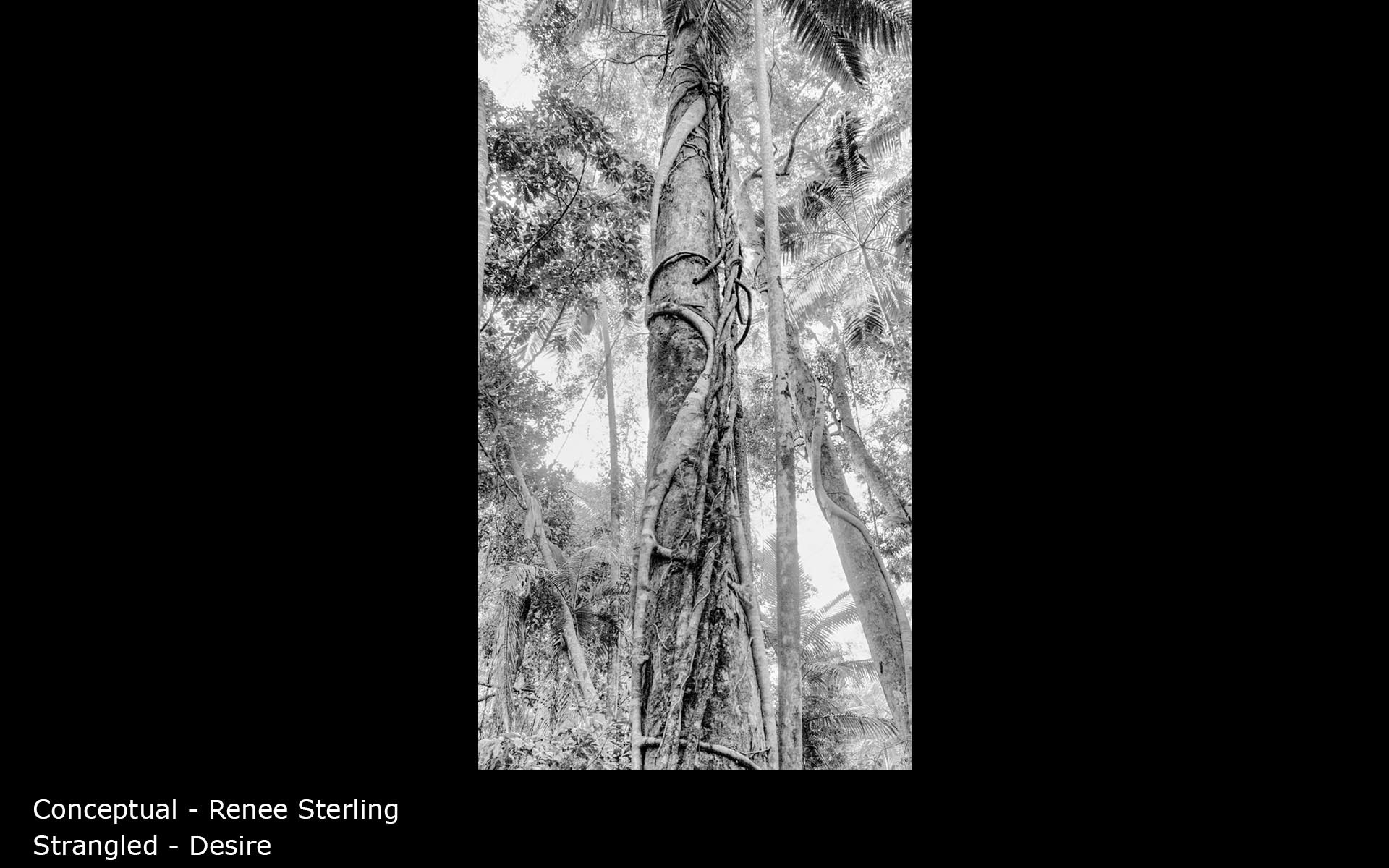Strangled - Desire - Renee Sterling