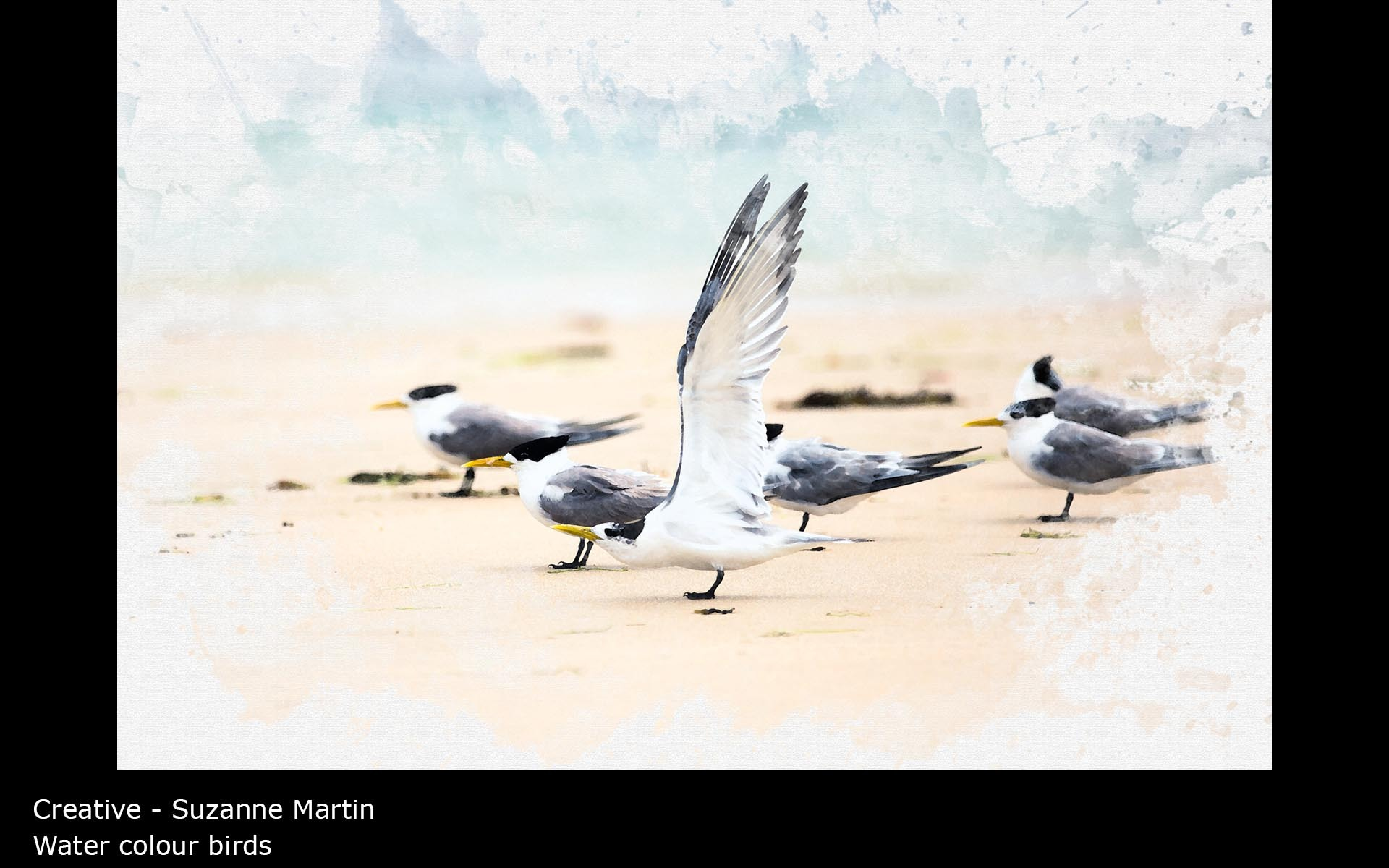 Water colour birds - Suzanne Martin