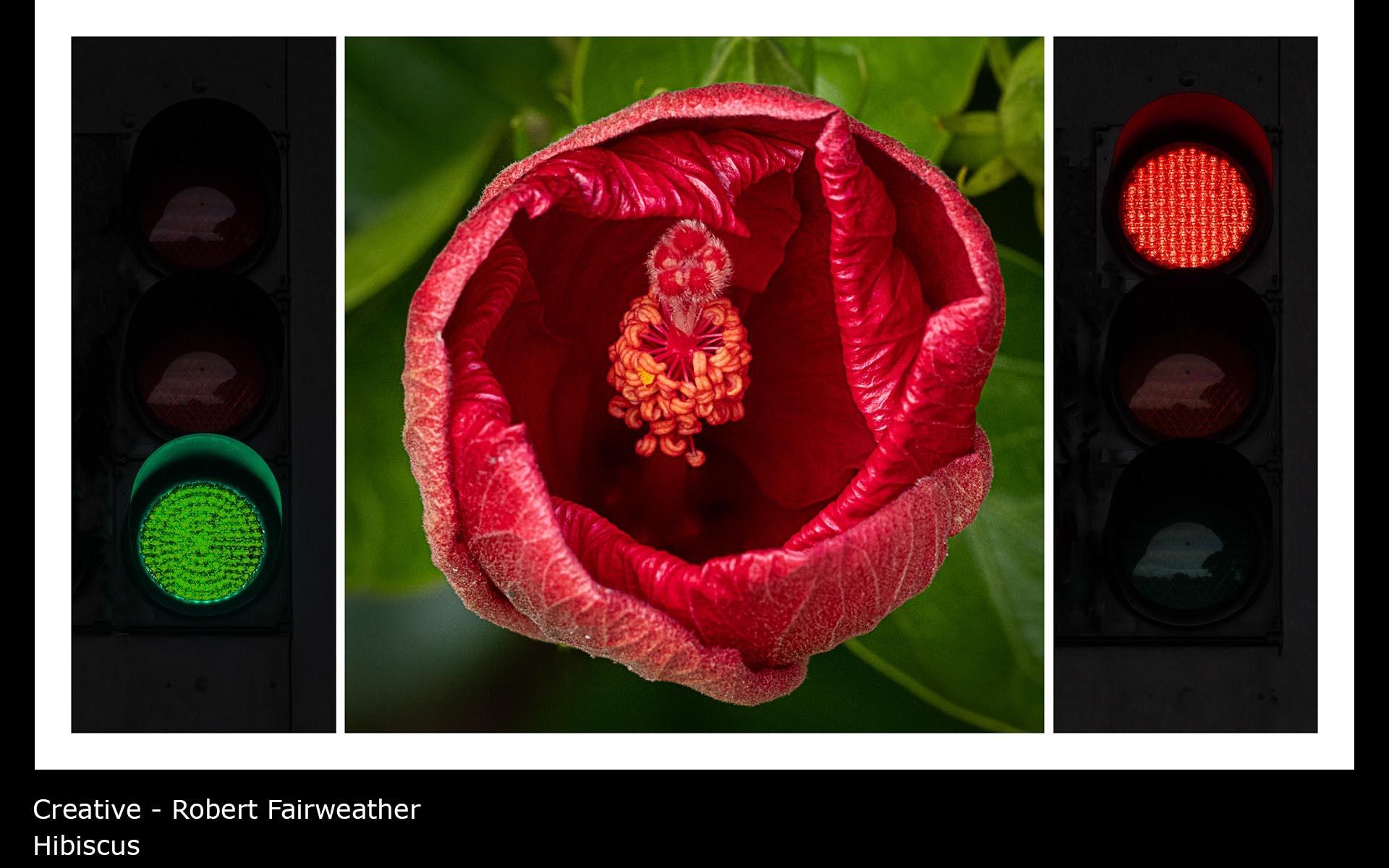 Hibiscus - Robert Fairweather