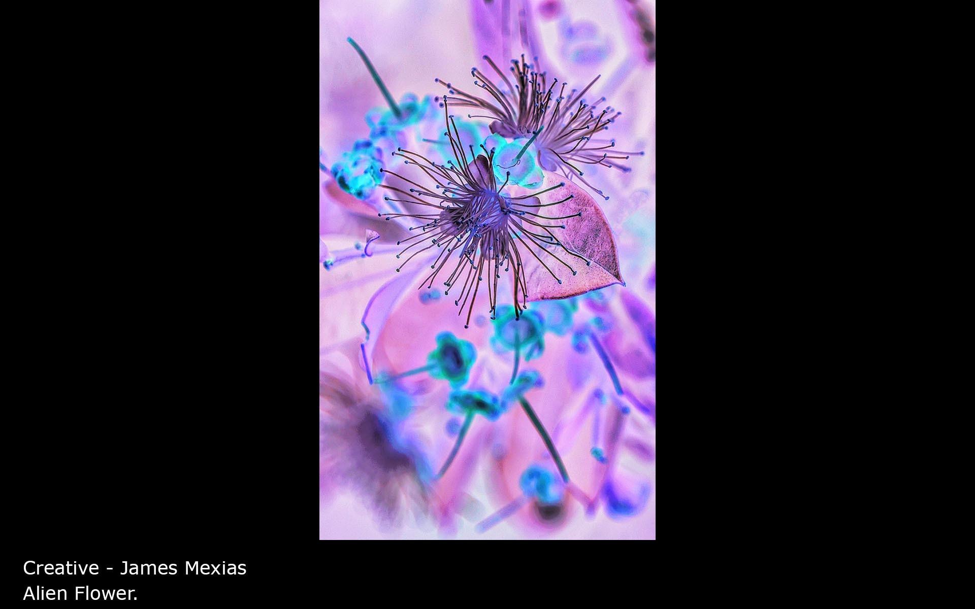 Alien Flower. - James Mexias