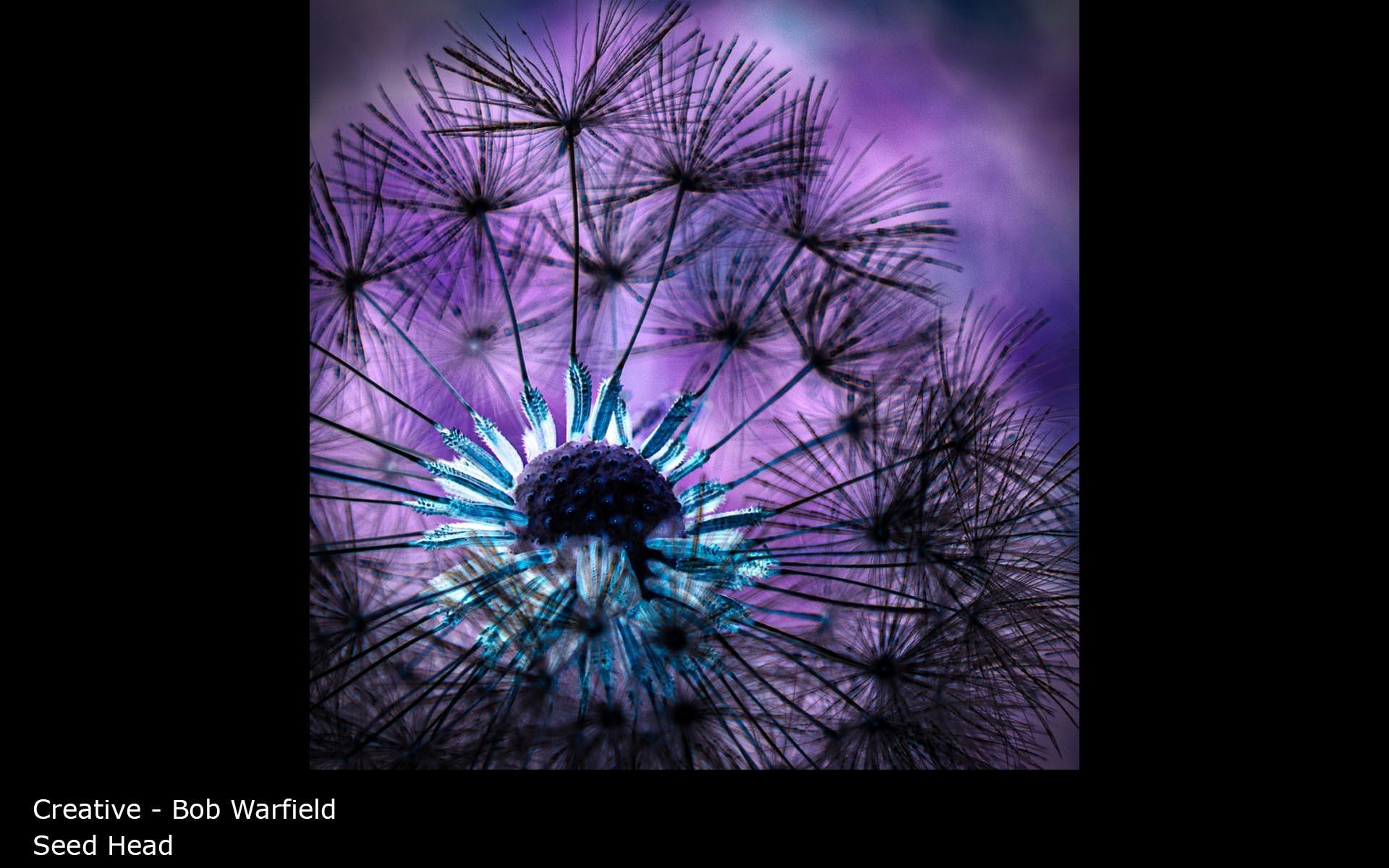 Seed Head - Bob Warfield