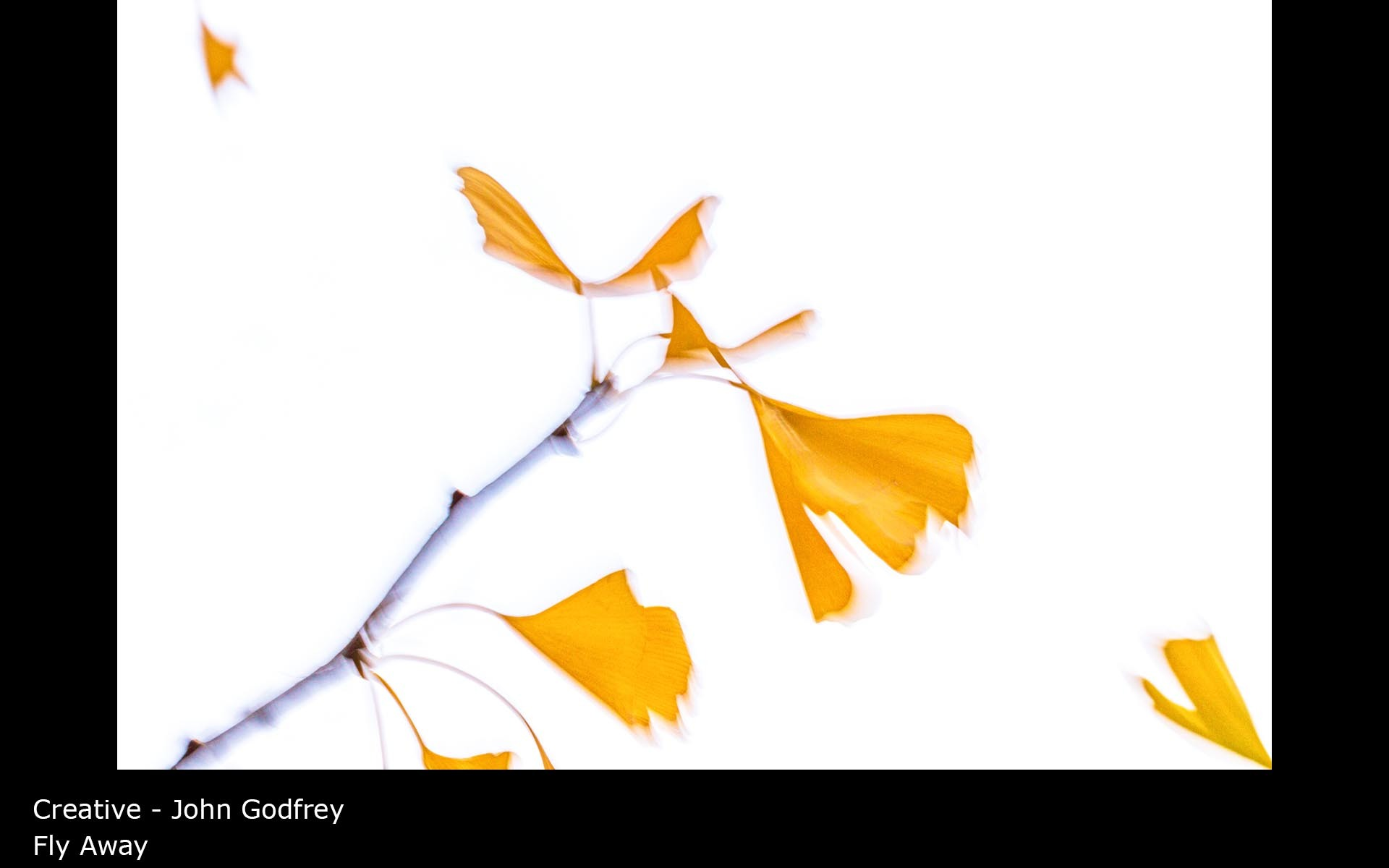 Fly Away - John Godfrey