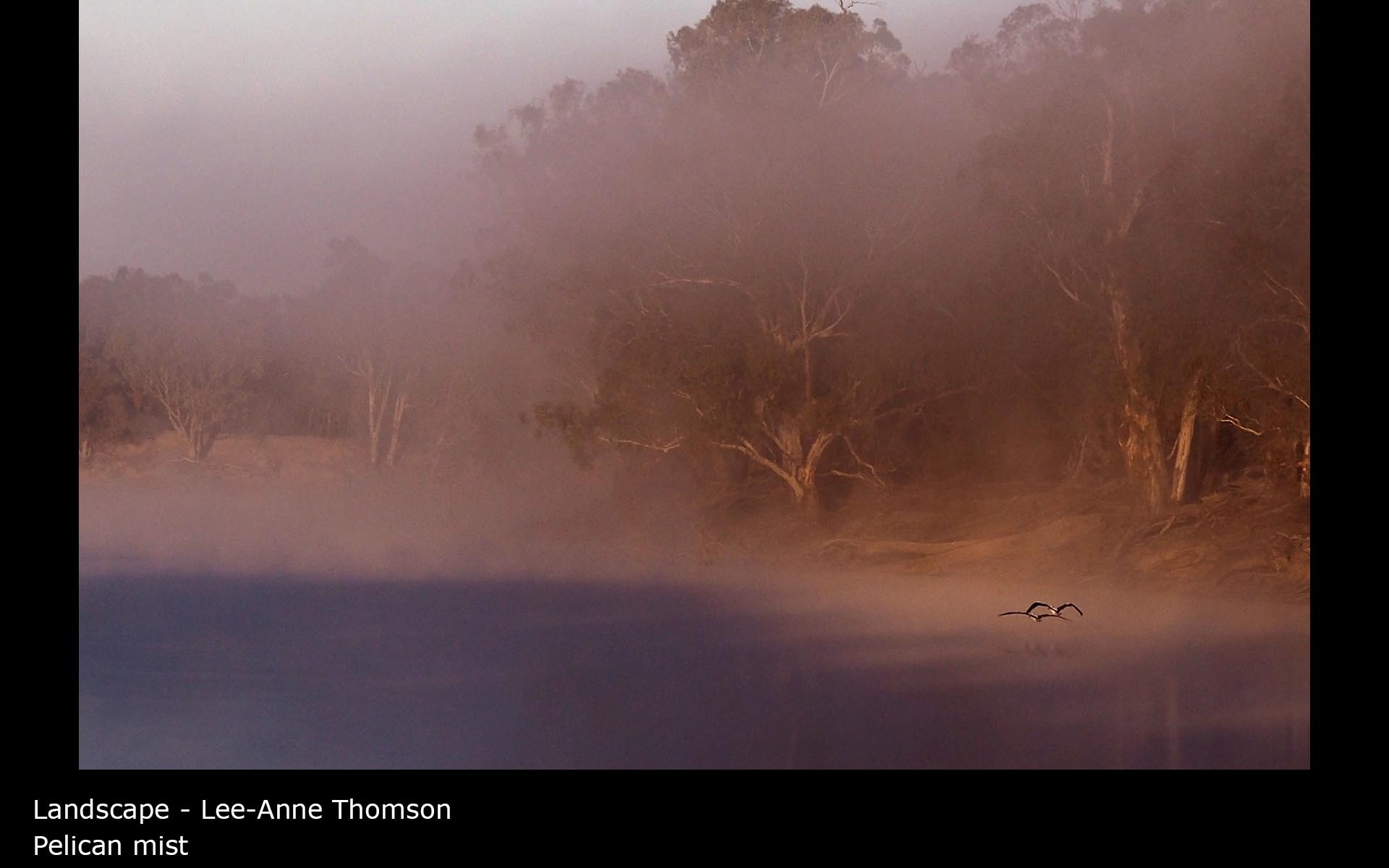 Pelican mist - Lee-Anne Thomson
