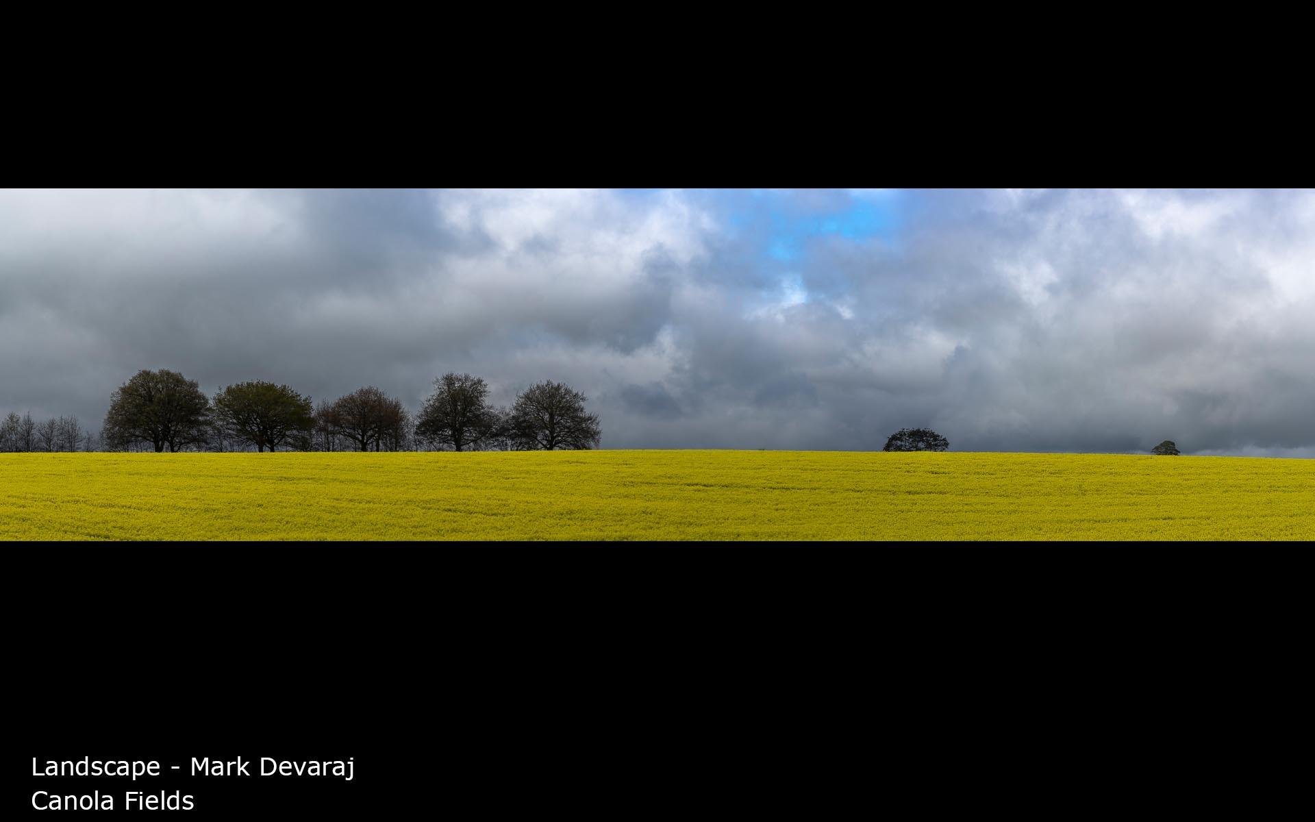 Canola Fields - Mark Devaraj