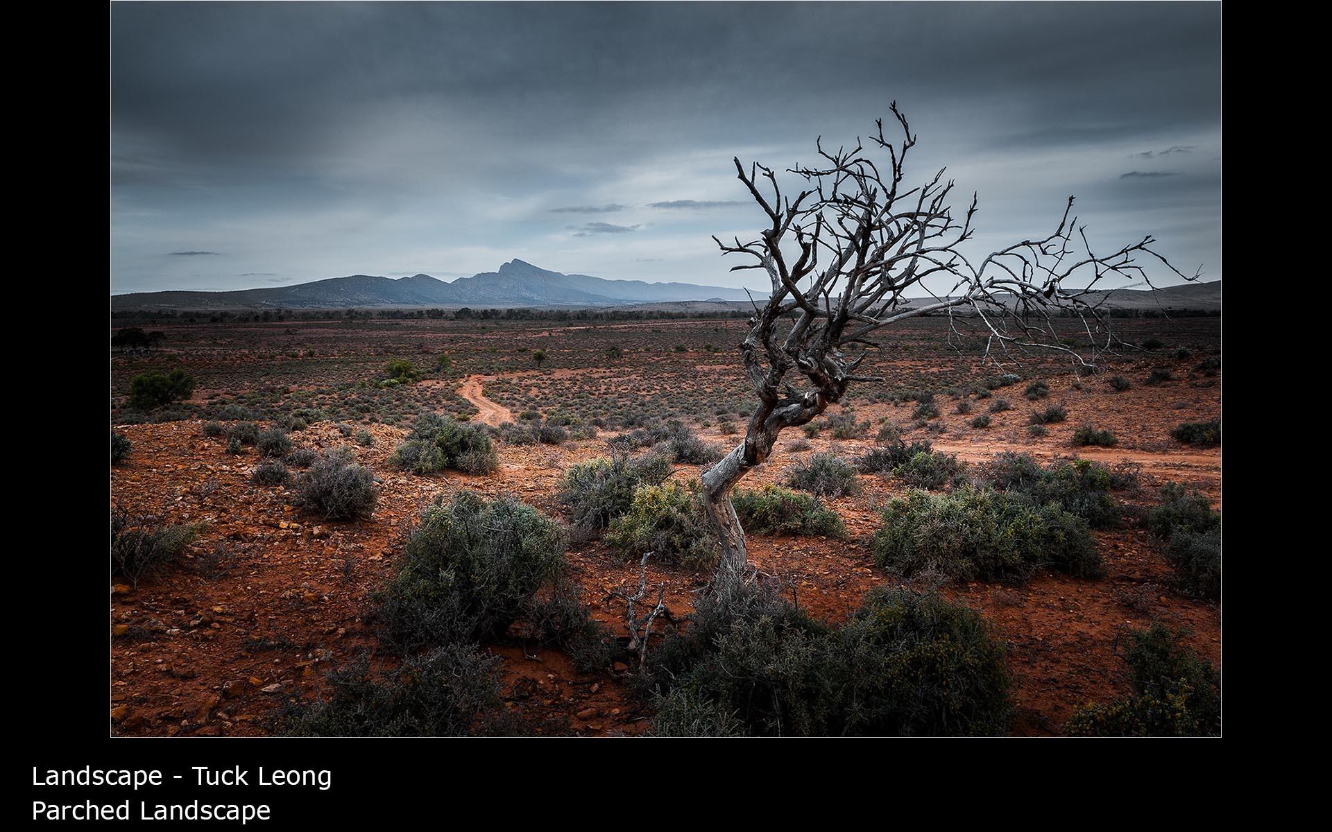 Parched Landscape - Tuck Leong