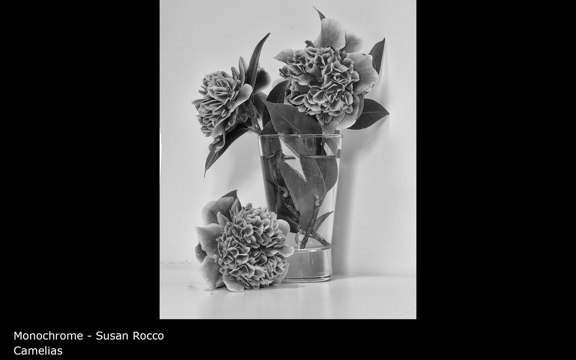 Camelias - Susan Rocco