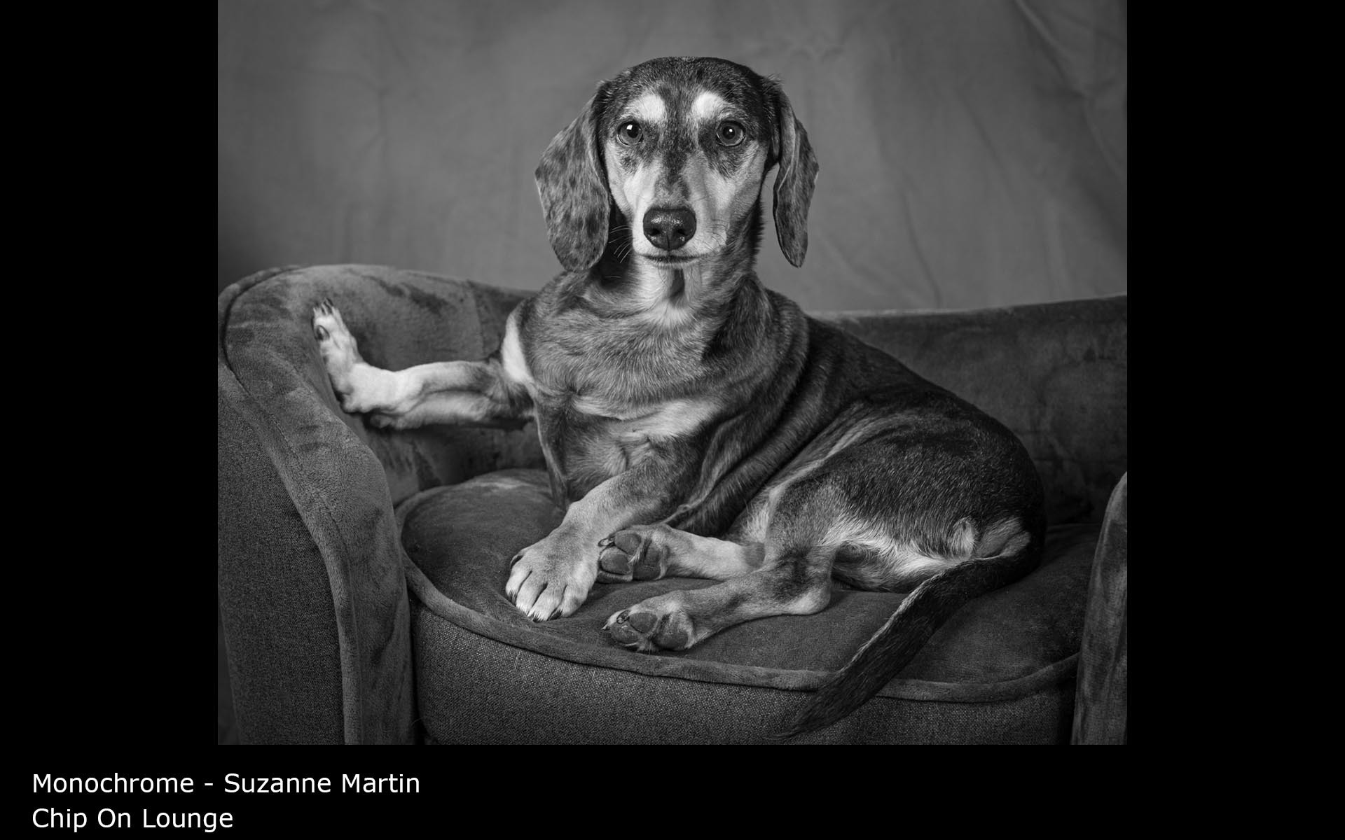 Chip On Lounge - Suzanne Martin