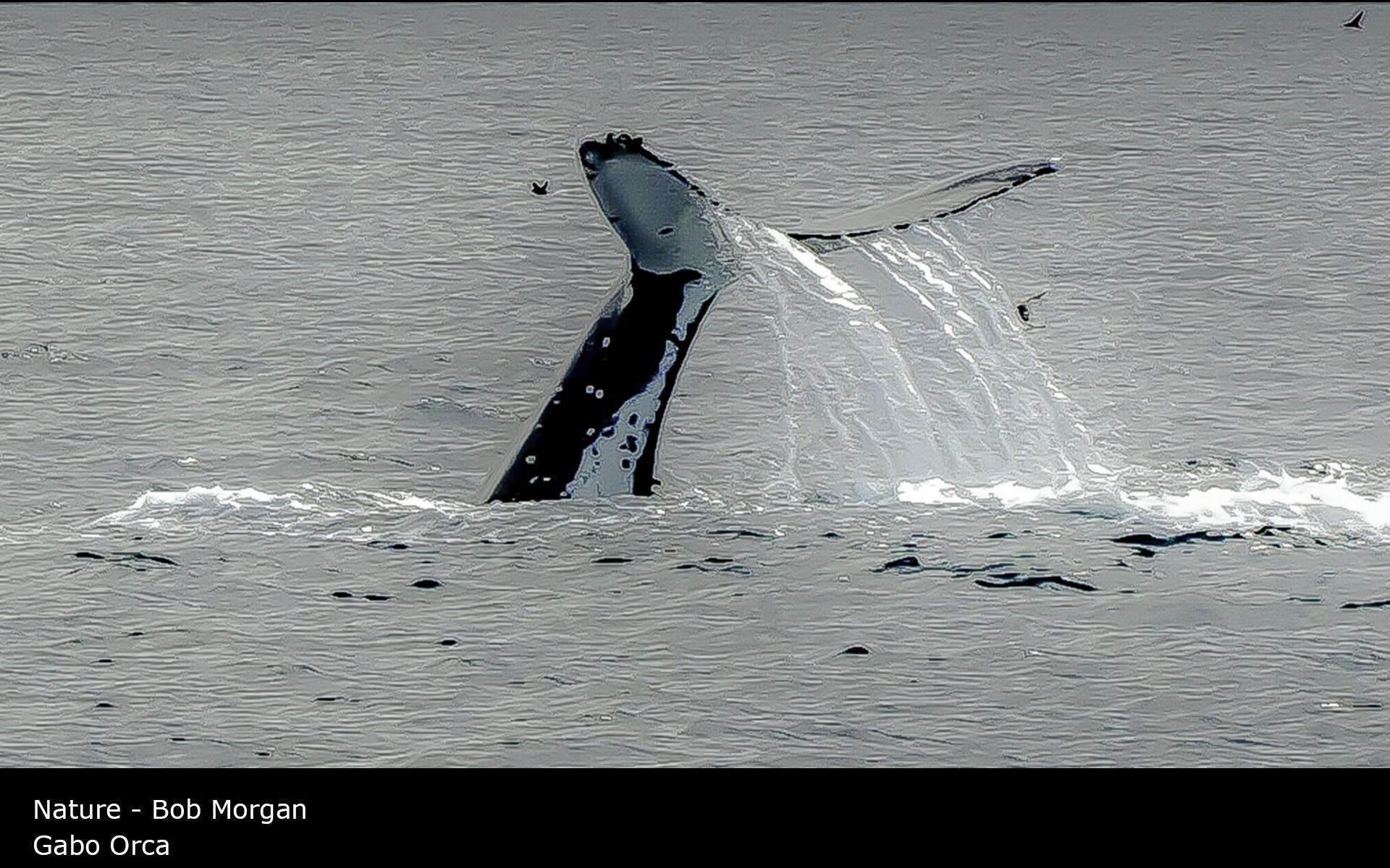 Gabo Orca - Bob Morgan