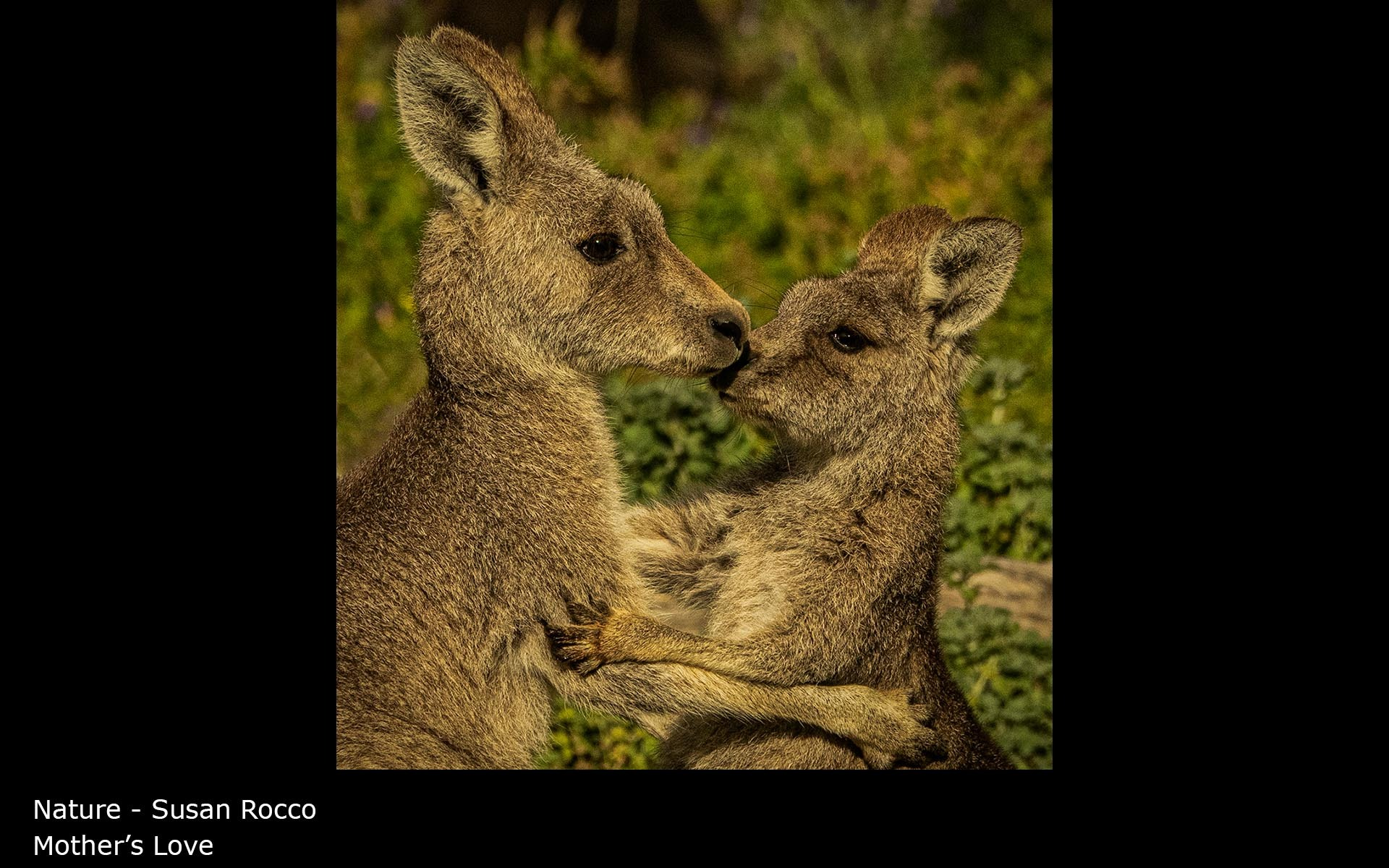 Mother's Love - Susan Rocco