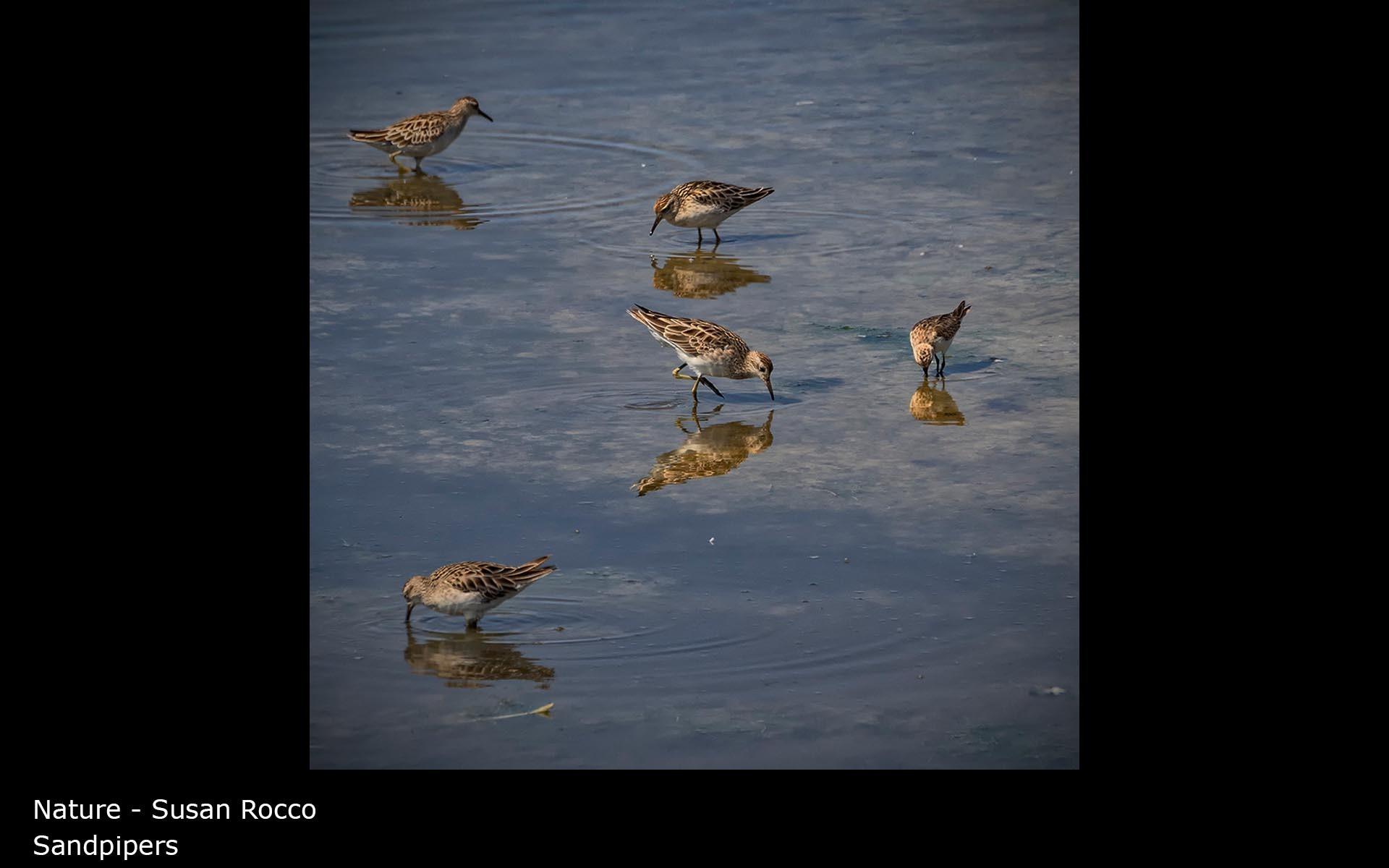 Sandpipers - Susan Rocco